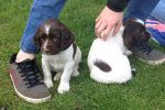 Lowen 1st litter 2014-10_n